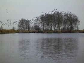 ...mit Vogelwelt...