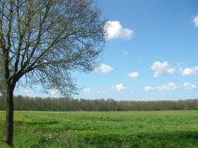 Ihlower Wald