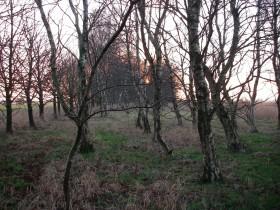 Tergast - Wald