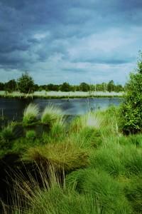 Moorsee Brockzetel (1994)