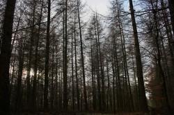 Langsam wird der Wald erwachsen