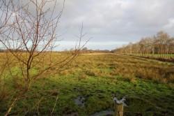 Ostfriesische Landschaft...