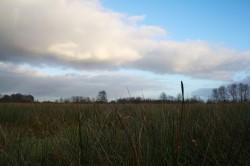 ...welches langsam in Feuchtwiesen übergeht