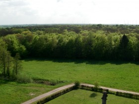 Blick über den Wald