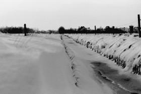 Feld bei Harsweg, ca. 1979
