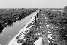 Feld nach Winter 1979
