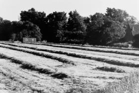 Hinter Tief bei Haskamp, 1979