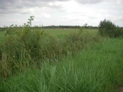 Startpunkt ist das verlandete Siersmeer...