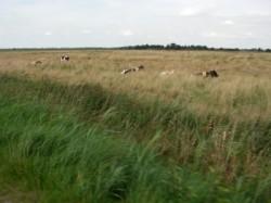 ...an den Weiden vorbei...