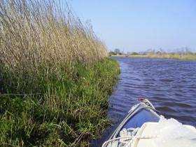 ...an schilfbewachsenen Ufern...