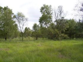 Moor Brockzetel