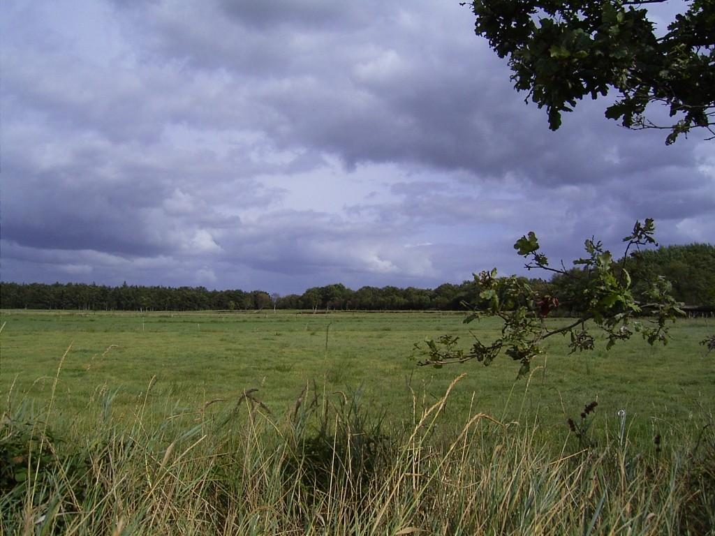 Moor Brockzetel (Aurich)