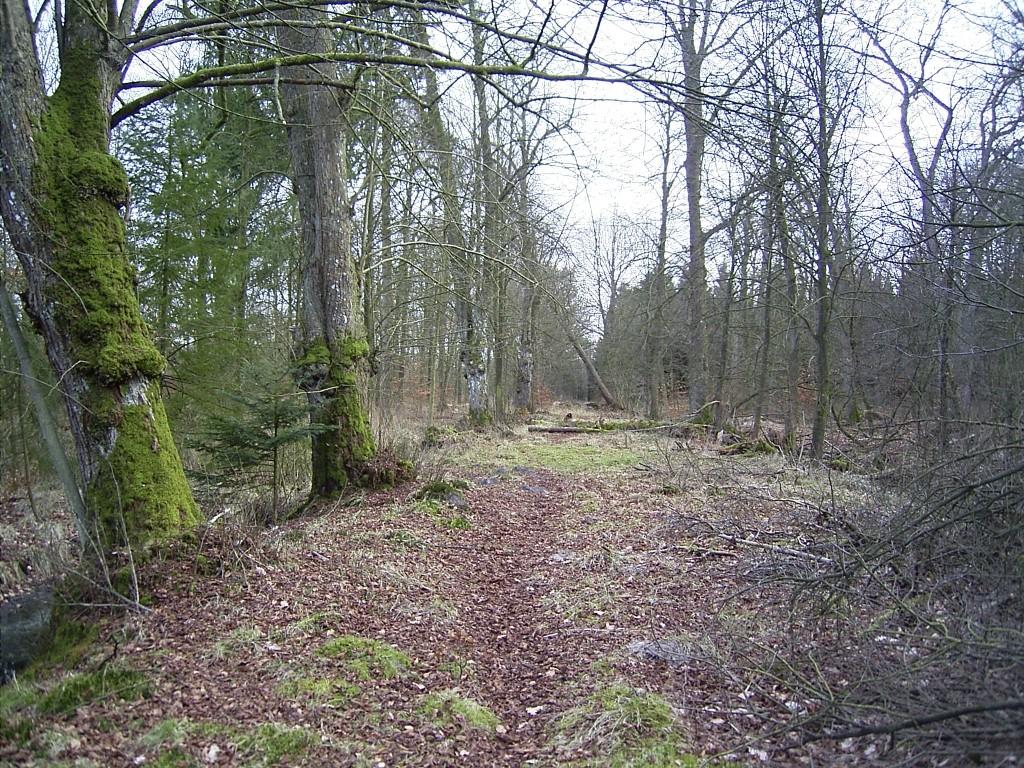 Forst Ihlow