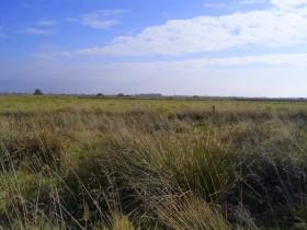 Feld bei Barstede