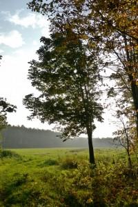 Herbst im Ihlower Wald