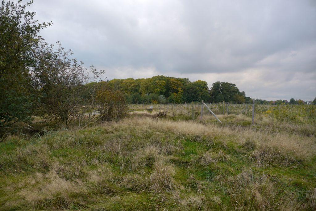Wald und Feld