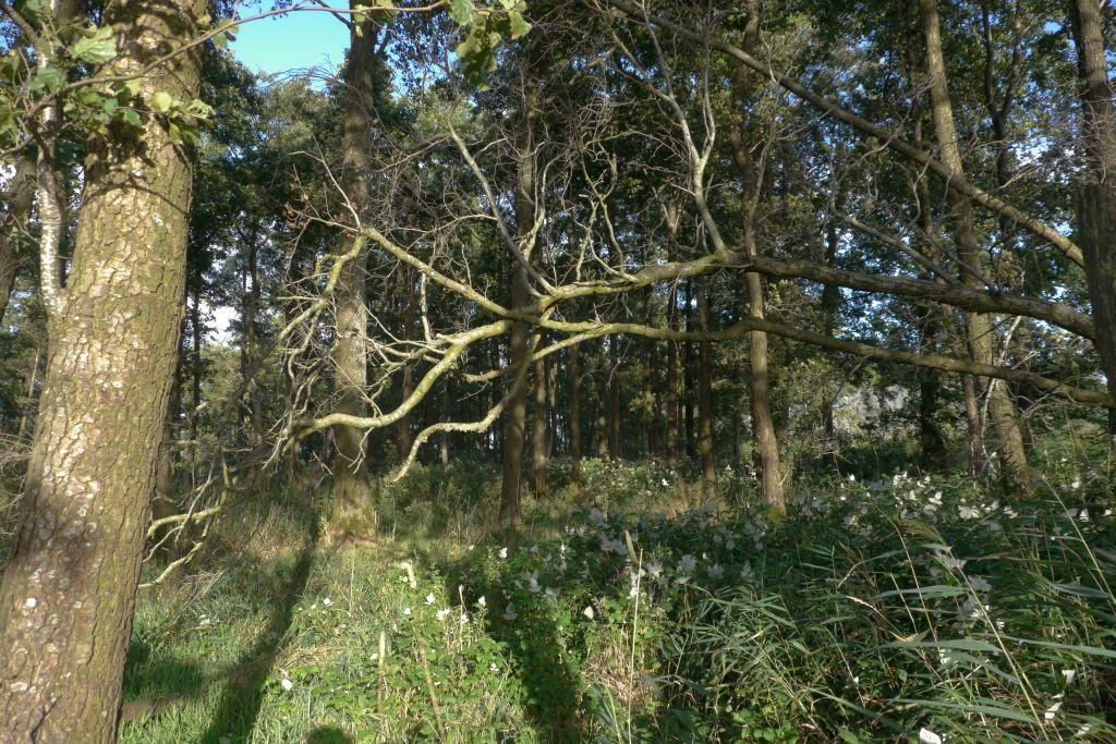 Ab in den Erlenwald...