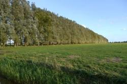 Der andere Wald