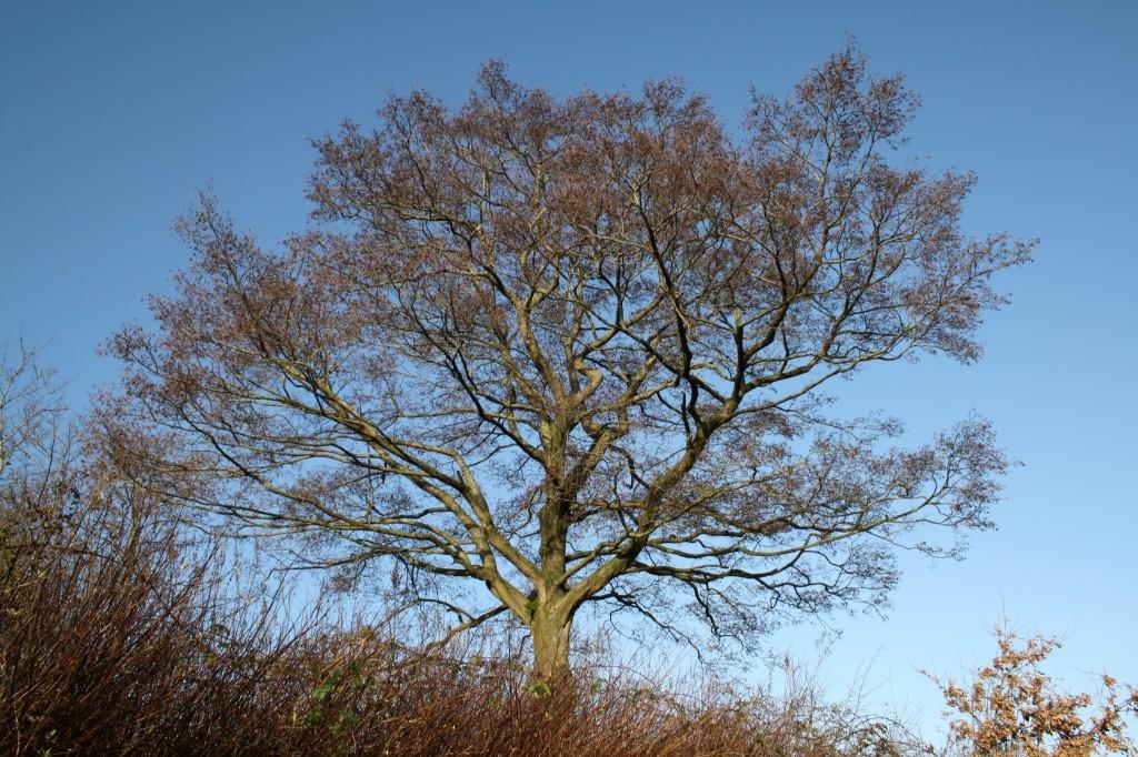 Baum aum Ufer