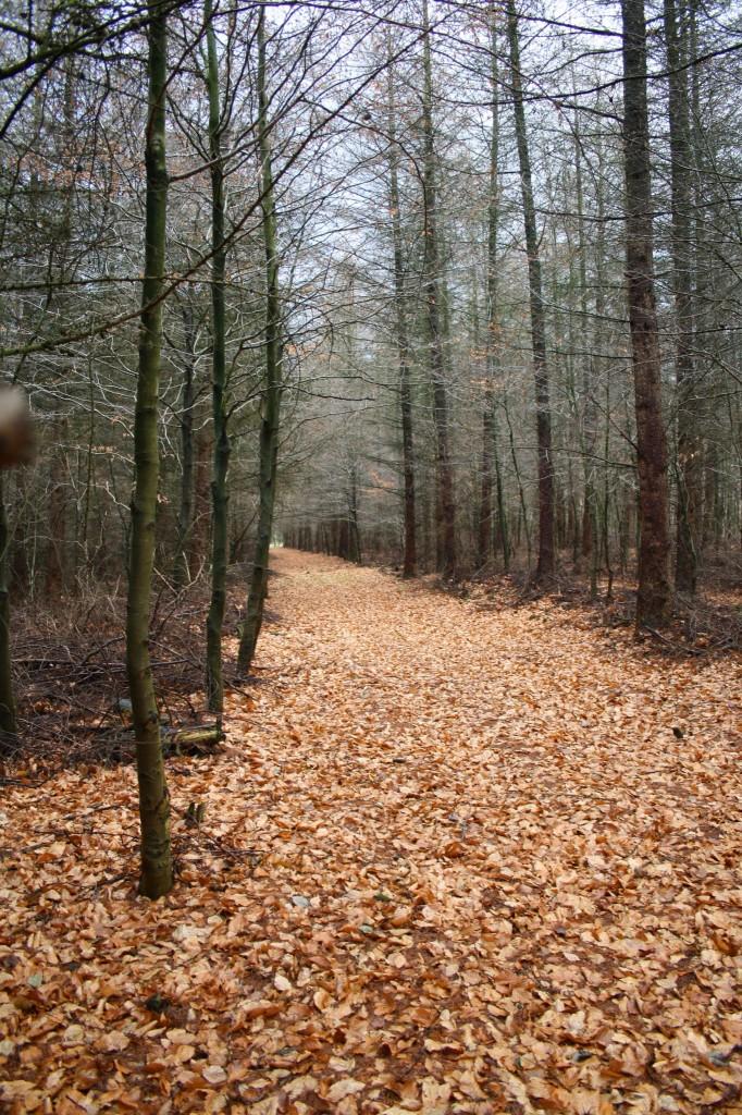 und große Pfade im Wald...