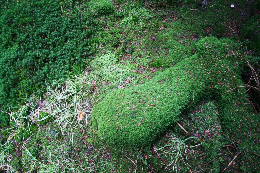 Moos überwuchert den Boden