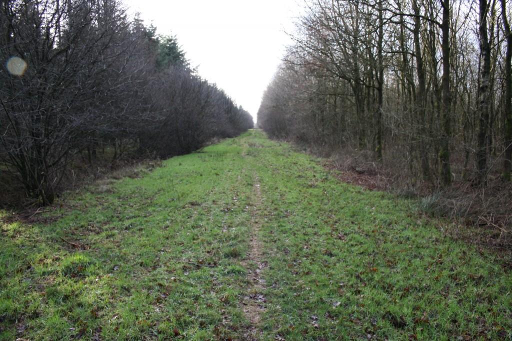 Der Weg führt...