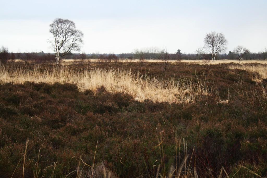 Heide breitet sich aus...