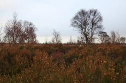 Blick zurück ins Moor...