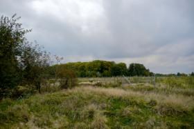 Stadtwald Emden