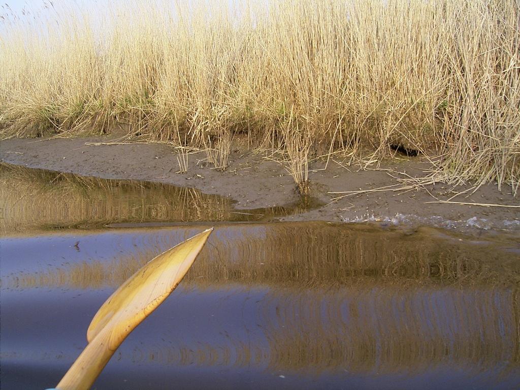 Niedrigwasser und Bisamlöcher