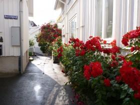 Rosengasse Klädesholmen