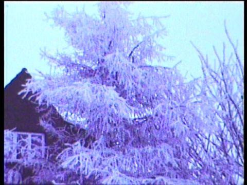 Der erste Frost 1978