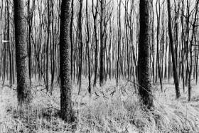 Wald Ihlow