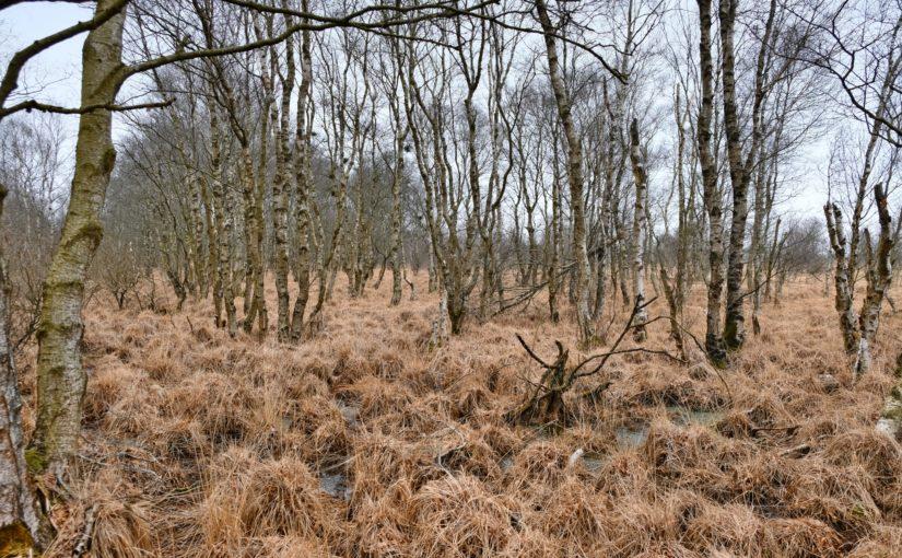 Neue Tour: das Alte Moor bei Pfalzdorf